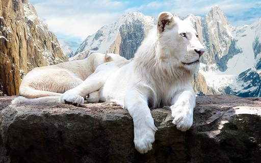 20140829211217-snow-lion-1280x800-3.jpg